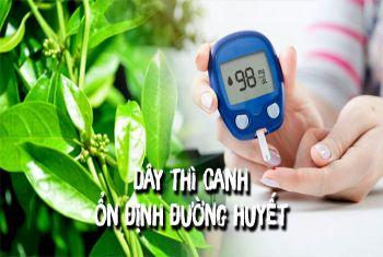Các cây thuốc Đông y giúp ổn định đường huyết tốt nhất